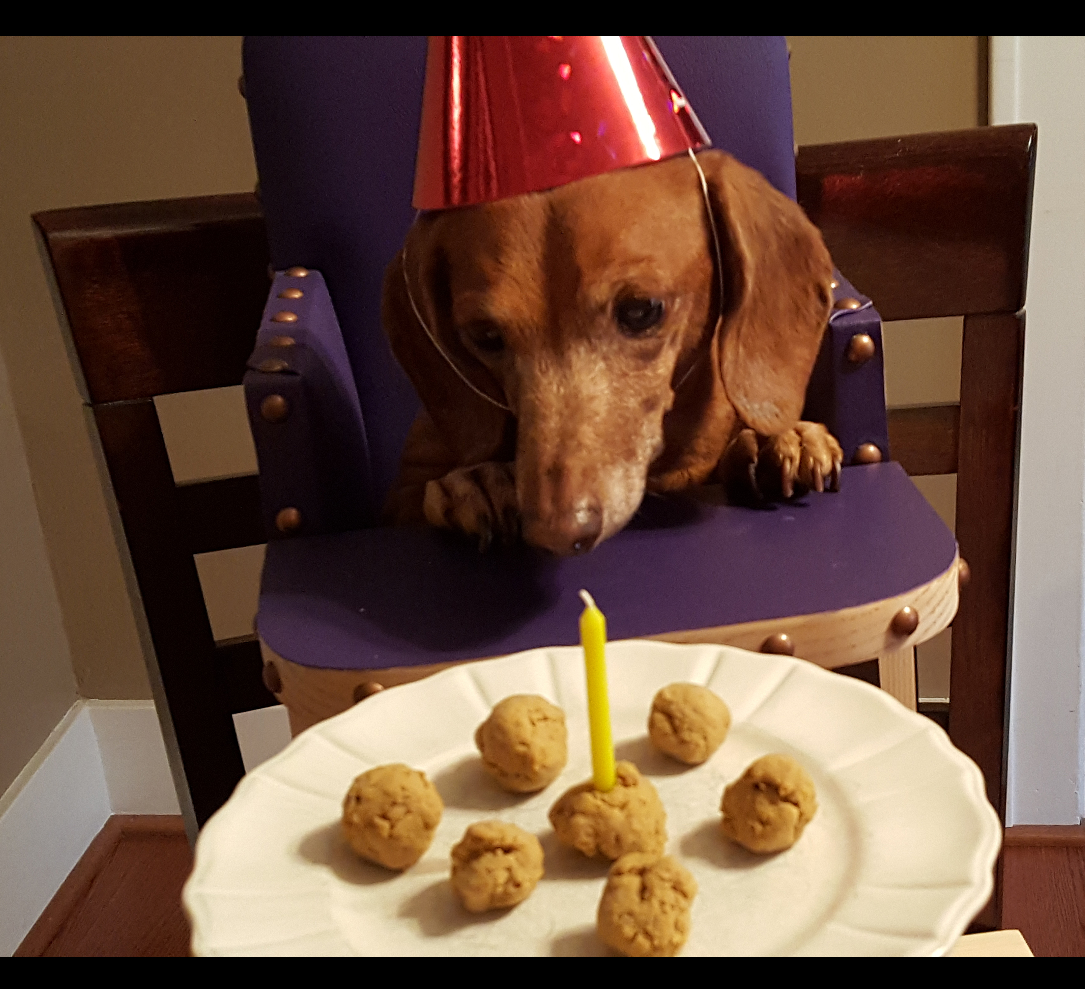 Mocca turns twelve