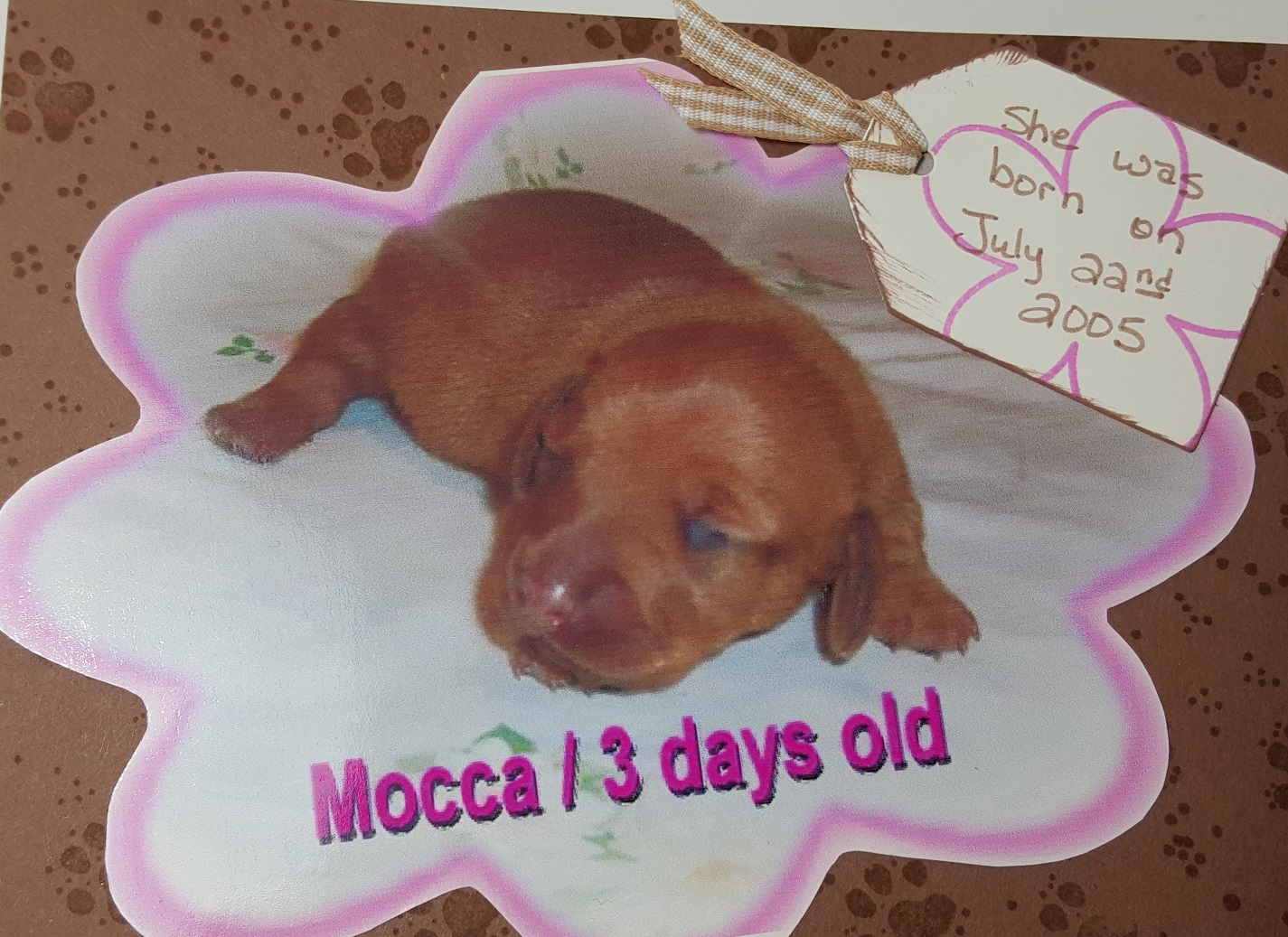 Vicki-Mocca-newborn pup